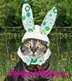 """Cat_Dog Bunny Rabbit Ears- Bunny Costume for cats and dogs (10-14"""" collar) -  Pampered Whiskers"""